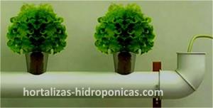 Cultivo hidroponico.