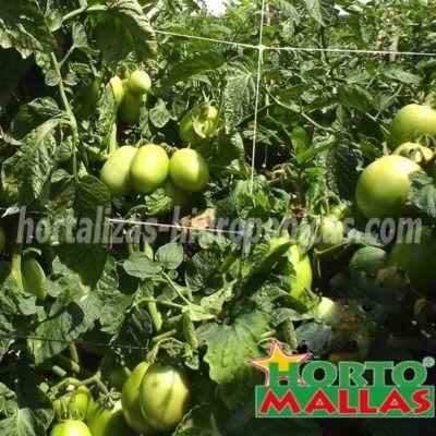 malla tutora en tomates