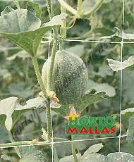 sistema hidroponico en melon